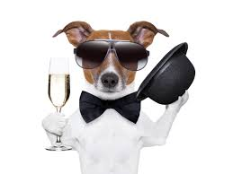 chien champagne.png